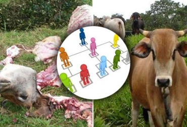 Delitos contra la ganadería, organización en carneo y robo de ganado, toma armada de las fincas, extorsión desde las cárceles, CONtexto Ganadero, noticias de ganadería colombiana.