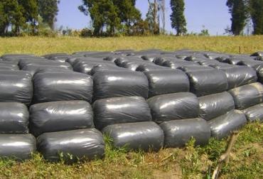 Suplemento alimenticio para ganaderos del norte de Colombia, silo de maíz, gestión de dirigentes gremiales ante el Ministerio de Agricultura, ganaderos recibirán silo de maíz, CONtxto Ganadero, noticias de ganadería colombiana.