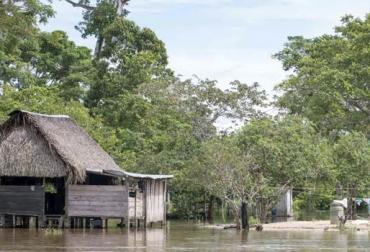 Lluvias en Guaviare, cinco días seguidos, praderas afectadas, extenso verano, alivio, falta de comida para el ganado, mejorarán praderas, CONtexto Ganadero, noticias de ganadería colombiana.