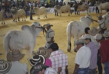 Ariari, Colombia, Granada - Meta, Sexta feria del Ariari en Granada-Meta, bovinos y equinos en la feria de Ariari, CONtexto ganadero, noticias de ganadería colombiana