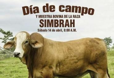 Día de campo en Cimitarra-Santander, hacienda el Corcel Paisa, muestra comercial de Simmental y Sumbrah, agenda académica sobre la raza, nutrición, reproducción animal, nutrición, CONtexto Ganadero, noticias de ganadería colombiana.