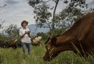 Basarse en la información, actividad ganadera, registros, soportes, desbalance, manejo de inventarios, abigeato, CONtexto Ganadero, noticias de ganadería colombiana.