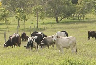 A menores costos mayor utilidad, estudio de costos, de lechería a ceba, flujo de caja quincenal a trimestral, costo de insumos, precio de leche, CONtexto ganadero, noticias de ganadería colombiana.