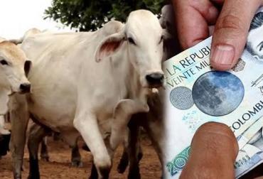 No participó en robo de ganado y lo asesinan, delincuente le propuso robar y no aceptó, hijo de mayordomo, indígena Wayuu, abigeato generalizado, productores molestos, CONtexto Ganadero, noticias de ganadería colombiana.
