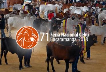 Congreso Mundial Brahman, Exposición Nacional Cebú, medidas sanitarias, actividades ganaderas, ganado desde Venezuela, irresponsabilidad, riesgo de patrimonio, riesgo ganadero, CONtexto ganadero, noticias de ganadería colombiana.