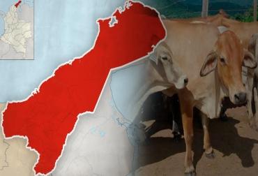 Nuevo foco de aftosa, Maicao Guajira, segundo foco primario, zona de frontera con Venezuela, CONtexto Ganadero, noticias de ganadería colombiana.