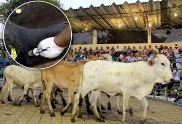 Vacunar en subastas, generar confianza, comercialización, generar tranquilidad, propiciar confianza, recuperar tendencia de precios, CONtexto Ganadero, noticias de ganadería colombiana.