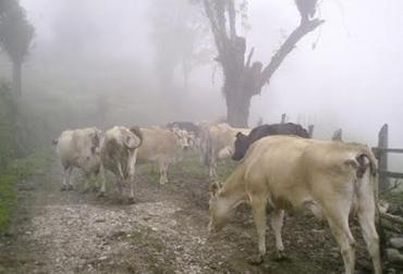 Heladas en Cundinamarca y Boyacá, usar silvopastoriles, praderas y pastos afectados, caña y maíz quemados, reducción de la producción, árboles protegen las praderas, CONtexto Ganadero, noticias de ganadería colombiana.