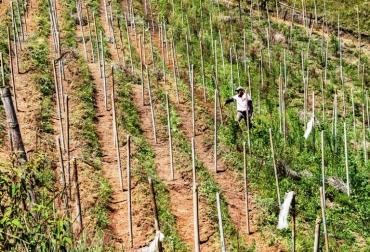 Ganadería, ganadería colombia, noticias ganaderas, noticias ganaderas colombia, CONtexto ganadero, disminución de gases de efecto invernadero, cambio climático, envaraderas de madera, Gobernación de Antioquia, Cornare, tala anual de 150 mil árboles, Secretaría de Medio Ambiente de Antioquia, Antioquia,