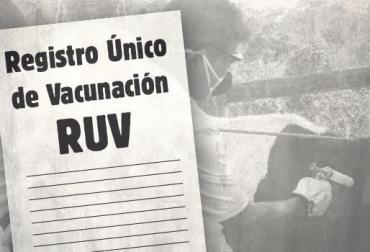 Mercado negro de RUV, productores que no son ganaderos, acceso a créditos de fomento, se hacen pasar por ganaderos, acceso a recursos Finagro, adquieren RUV comprados, Solicitar registro de predio pecuario, contrarrestar mercado negro de RUV, distorsión de información, distorsión de inventario bovino, CONtexto ganadero, noticias de ganadería colombiana.