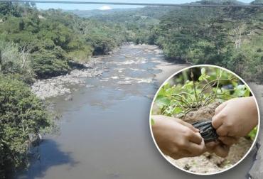 Hoya del Río Suárez, siembra de árboles, ahorro de alimentos, bodegas de suplementos alimenticios, constitución de esquemas arbóreos, afectaciones del fenómeno de El Niño, escasez de comida, CONtexto ganadero, noticias de ganadería colombiana.
