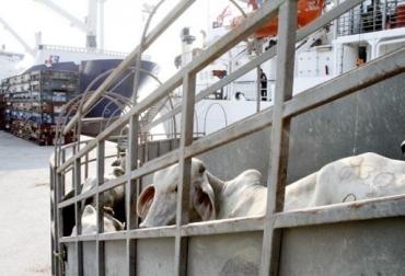Dinamizar la demanda de exportaciones, Expoganados Internacional S.A.S., recuperación de precios de ganado, incremento de costos de insumos, incremento de costos de producción, demanda errática, afectación económica, embarque a Irak, posible embarque a Líbano, CONtexto ganadero, noticias de ganadería colombiana.