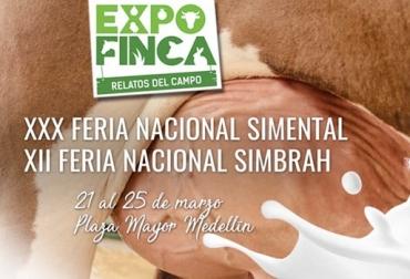 Feria nacional simmental, feria nacional simbrah, animales de raza pura, juzgamiento de Simmental, remate de puros, remate de cabezal, CONtexto ganadero, noticias de ganadería colombiana.