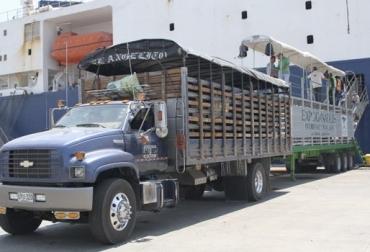 Reinician exportaciones de ganado al Líbano, negociaciones congeladas, situación sanitaria, ganado vivo, negociación FOB, mercancía puesta en buque, Expoganados, logro comercial, confianza en ganado colombiano, CONtexto ganadero, noticias de  ganadería colombiana.