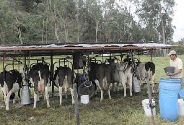 Pequeños productores, bajos precios, pagan la lehce mal, baja producción, conservar forrajes, no compran la leche, Gobierno Nacional, Cundinamarca, Zipacón, trabajo, responsables, productores, problemas, precio, verano, lluvias, exigencias, calidad, no reconocen, Precio de leche en Zipacón no ha subido en 10 años, CONtexto ganadero, ganaderos Colombia, noticias ganaderas Colombia