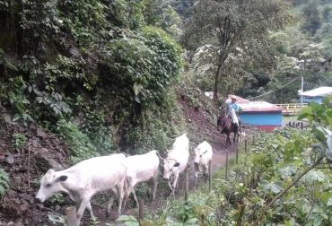 Ganadería, ganadería colombia, noticias ganaderas, noticias ganaderas colombia, CONtexto ganadero, bon, ganado BON, C.I. El Nus de Agrosavia, Cooperativa de Productores Agroindustriales y Ambientales de Ituango, COOPAAI, Blanco Orejinegro, Ituango, ganaderos de ituango