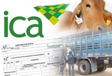 ganadería, ganadería colombia, noticias ganaderas, noticias ganaderas colombia, contexto ganadero, casanare, ica, ica casanare, guías casanare, ica colombia, guías de movilización,