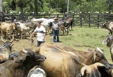 ganaderos del Meta, cierre de la vía al Llano, compromiso del Gobierno, dinámica pecuaria del Meta, actividades pecuarias del Meta, actividades ganaderas del Meta