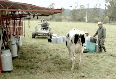 Productores Boyacá, productores Coocampo Boyacá 2019, ganaderos Boyacá Coocampo 20197, proyectos ganaderos Coocampo Boyacá 2019, lechería, asociatividad, Acopio de leche, leche Colombia, fedegan, ordeño, Ganadería, ganado bovino, Coocampo, Colombia, Canadá, Fincomercio, Asociación Canadiense de Cooperativas (ACC), proyecto Impact, Incubadora Empresarial Colombia Solidaria Gestando, CONtexto ganadero, ganadería colombia, noticias ganaderas colombia