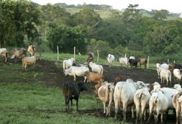 ganadería, ganadería colombia, noticias ganaderas, noticias ganaderas colombia, contexto ganadero, abigeato en La Mojana, hurto de bovinos, hurto de bovinos en la Mojana, robo de ganado en La Mojana, medidas control abigeato, inseguridad en la Mojana, extorsiones en La Mojana, extorsiones a ganaderos, consejo de seguridad