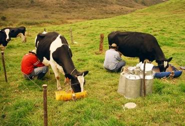 Ganadería, ganadería colombia, noticias ganaderas, noticias ganaderas colombia, CONtexto ganadero, leche, leche antioquia, ganaderos de antiquia, lecheros antioquia, alianzas productivas antioquia, asociatividad lecheros de antioquia, Gobernación de Antioquia