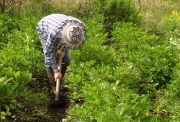 Regalías para sector agropecuario de Quindío