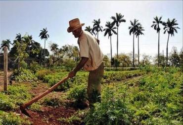 El Valle tiene sembradas alrededor de 30.000 hectáreas en frutas.
