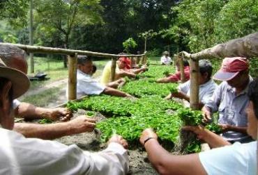 Sector agropecuario en Putumayo
