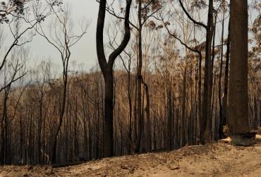 Servicio ambiental disminuye en la Amazonía
