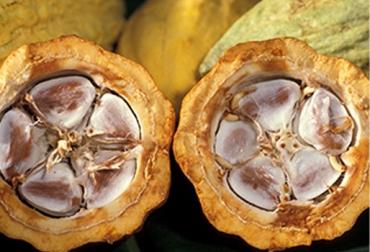 fondo rotatorio para cacaoteros