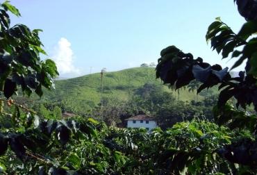 Saber en qué lugar se siembra, ayuda a la productividad del café.jpg