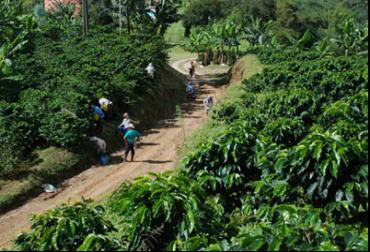 Proyectos en Quindío para Oportunidades rurales