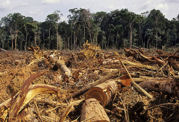 deforestación en colombia cifras