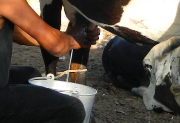 Producción leche
