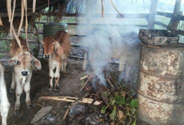 humo en lugar de insecticidas
