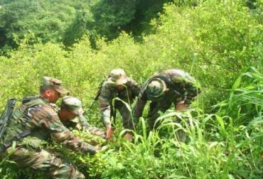 Erradicación manual en medio de la selva