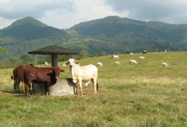 Repoblamiento bovino en Atlántico