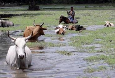 rio cauca inundaciones semovientes