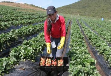 Campesinos de Cáqueza contarán con granja integral.