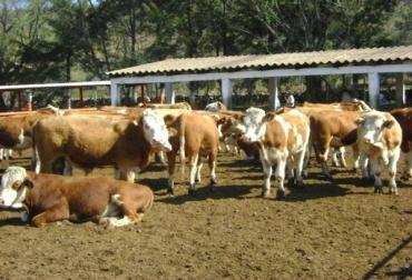 Los ganaderos tendrán herramientas analíticas para monitorear todos los aspectos de manejo de su hato, incluyendo la producción, la salud, la fertilidad y el análisis.