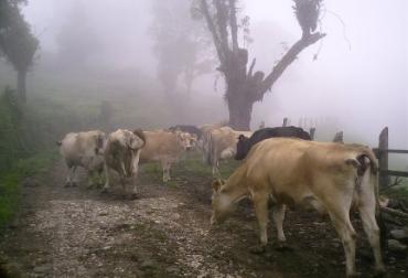 El Ideam estableció bajas temperaturas en Cundinamarca y Boyacá. Foto: Archivo.