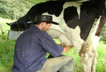 Los ganaderos de Córdoba comenzaron a vender sus reses por baja economía.