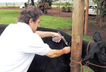 Comienzan preparativos para ciclo de vacunación en 2013.