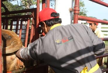 La Alcaldía beneficiará a 31 finqueros en Casanare.