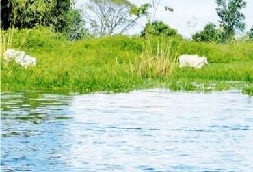 Productores agropecuarios de La Mojana, preocupados por inundaciones y extorsiones.