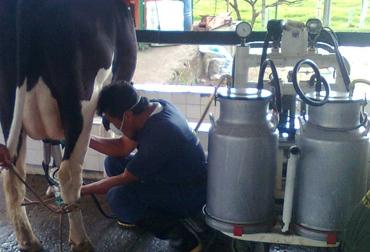 Producción de leche. Foto: Archivo Fedegán.