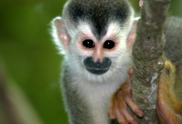 Preservación del mico tití