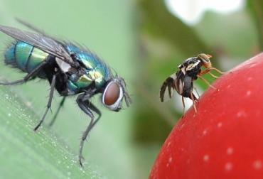 actualidad sobre los insectos