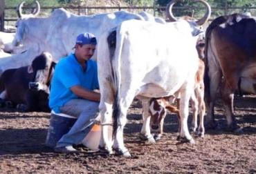 Precio leche Colombia