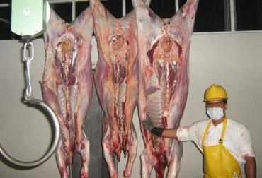 Sacrificio clandestino de ganado